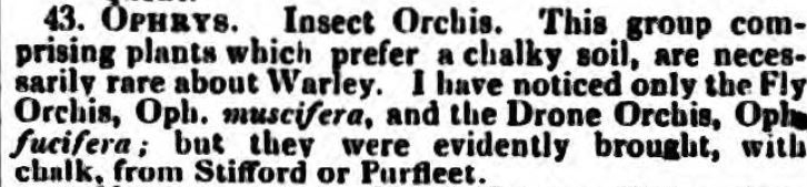 1837.08.02 orchids from Purfleet, Essex Herald